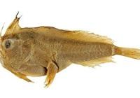 Loài cá biển đầu tiên tuyệt chủng do môi trường sống