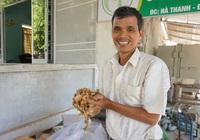Lão nông làm loại trà giảm cân giá gần triệu/kg, nhiều siêu thị lớn đặt hàng