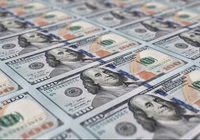 Tỷ giá ngoại tệ hôm nay 12/8: Đồng USD tiếp tục giảm mạnh