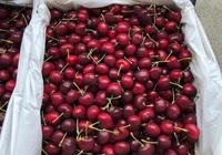 Giá cherry giảm hơn 40%