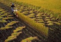 Nông nghiệp thế giới bị tổn hại nghiêm trọng do ảnh hưởng của dịch Covid-19