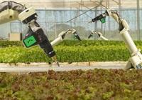 Nông nghiệp công nghệ cao Hà Lan: tay không chạm đất vẫn hốt bạc tỷ