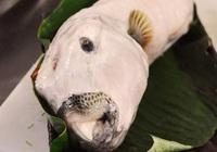 Cá mặt thỏ - loài cá tử thần