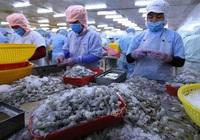 Xuất khẩu tôm, cá ngừ sang EU tăng chóng mặt