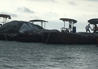 Quảng Ninh điều tra làm rõ nguồn gốc gần 1.000 kiện thuốc lá vận chuyển trên biển