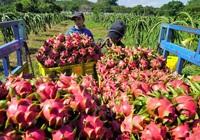 Xuất khẩu nông sản sang Trung Quốc sẽ ngày càng khó