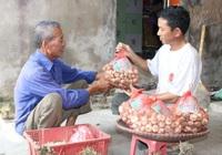 Bắc Ninh có 19 sản phẩm nông nghiệp được bảo hộ sở hữu trí tuệ