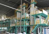 Ngân hàng siết nợ loạt công ty sản xuất, chế biến gạo