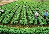 Trường hợp nào cần xác nhận hộ trực tiếp sản xuất nông nghiệp?