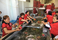 Nông sản Việt Nam xuất khẩu tăng mạnh nhờ tiếp cận thị trường 2,2 tỷ người