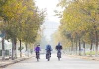 Đắm chìm bên hàng cây phong lá đỏ đẹp mê hồn ở Hà Nội
