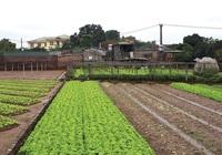 Giá đất nông nghiệp vùng ven Hà Nội tăng chục lần
