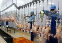 Đồng Nai: 22 dự án FDI đầu tư vào chế biến nông, lâm, thủy sản