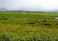 """Đà Nẵng: Giá đất nông nghiệp """"lao dốc"""" chỉ vài trăm ngàn/m2"""