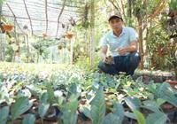 Quảng Nam: Phê duyệt kết quả đánh giá, phân hạng sản phẩm OCOP đợt 2 năm 2020