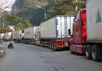 Trung Quốc siết thực phẩm đông lạnh, Bộ Công thương ra khuyến nghị