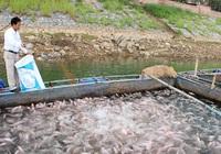 Cảnh báo kháng sinh nuôi trồng thủy sản tăng 33%