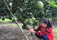 Khánh Hòa: Dư nợ các chương trình tín dụng chính sách đạt hơn 3.000 tỷ đồng