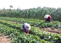 """Quảng Ninh: Giá đất nông nghiệp qua """"cơn sốt"""", đang giảm sâu"""