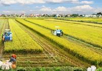 Tin vui cho tam nông: Kéo dài thời gian hỗ trợ 90% phí bảo hiểm nông nghiệp