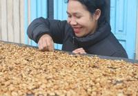 Cô gái K'ho khởi nghiệp từ cà phê Arabica vàng