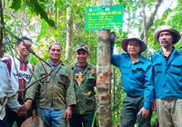 Quảng Nam trồng 80 triệu cây xanh
