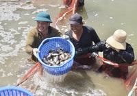 Nhờ vốn tín dụng chính sách, người nuôi cá lãi gần tỷ, kẻ trồng nấm đổi đời