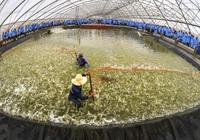 Bình Định triển khai quy hoạch khu nông nghiệp công nghệ cao hơn 2.000 tỷ đồng