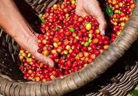 Giá nông sản hôm nay 28/2: Tiêu tăng nhẹ, cà phê và lợn hơi chững giá