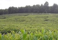 Đồng Hỷ - Thái Nguyên: Khoảng 1.350 tỷ đồng thực hiện chương trình xây dựng nông thôn mới