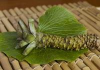 Wasabi - Loại cây khó trồng nhất thế giới