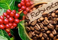 Giá nông sản hôm nay 3/3: Cà phê giảm nhẹ, tiêu tăng giá
