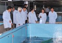 Nuôi tôm hùm trên bờ thành công tại Phú Yên