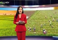 Bản tin thời sự Dân Việt 5/3: Hải Dương xuất khẩu 2.000 tấn nông sản sau khi bỏ giãn cách