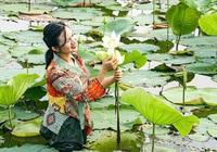 TT-Huế: Mở rộng diện tích trồng sen lên 745ha để nâng cao thu nhập cho dân
