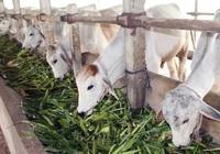 Giảm 50% mức thu phí thẩm định trong lĩnh vực chăn nuôi đến hết 2021
