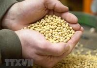 Argentina tiếp tục dẫn đầu thế giới về xuất khẩu bột đậu tương