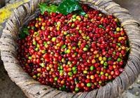 Giá nông sản hôm nay 13/4: Giá tiêu, cà phê tăng nhẹ