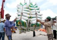Giá gạo xuất khẩu Việt Nam vượt Thái Lan