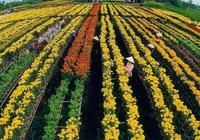 Đất nông nghiệp khác có được dùng để xây nhà xưởng không?