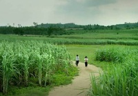 """Du lịch Phú Yên không thể """"ăn theo"""" bộ phim Tôi thấy hoa vàng trên cỏ xanh"""