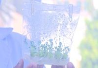 Đồng Tháp: Ứng dụng công nghệ sinh học trong nhân giống hoa