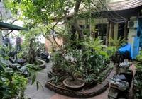 Khám phá ngôi nhà có khu vườn xuyên qua 2 phố duy nhất ở phố cổ Hà Nội