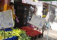 """Ngỡ ngàng với loại """"cà chua Lâm Đồng"""" giá nửa triệu đồng/kg"""
