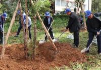 """Lâm Đồng: Trồng 50 triệu cây xanh với phương châm """"trồng cây nào, sống cây đó"""""""