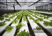 Ứng dụng công nghệ IOT trong sản xuất rau sạch, nông dân Ninh Bình thu gần 19 tỷ đồng mỗi năm