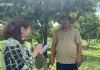Chàng trai bỏ phố về quê trồng chanh Thái, chỉ vặt lá bán cũng thu tiền tỷ