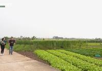 Phú Thọ: 1,5 triệu tem truy xuất nguồn gốc được gắn cho nông sản