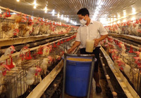 Nam Định tăng cường chuỗi liên kết sản xuất VietGAP, nâng cao năng suất và giá trị nông sản địa phương