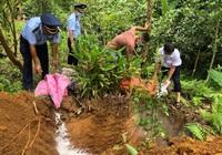 Hà Giang: Trong 1 tháng, tiêu hủy hơn 100 tấn lợn nhiễm dịch tả châu Phi